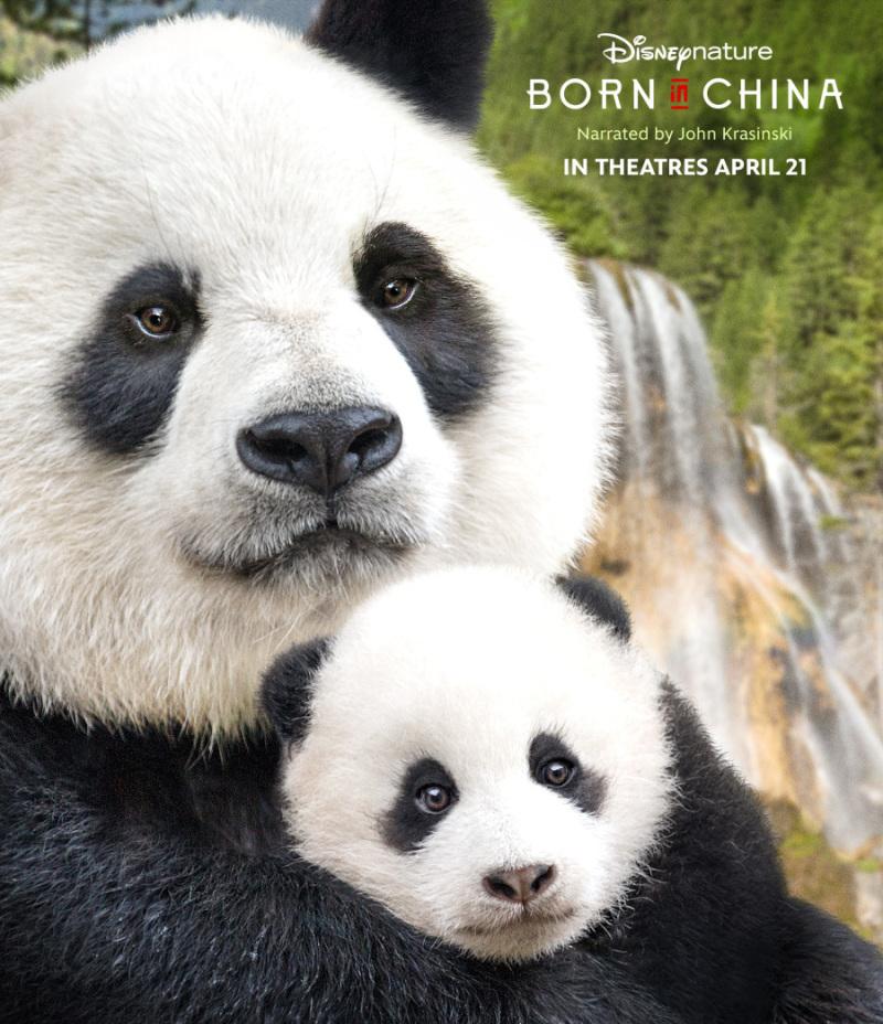 r borninchina header b074815a